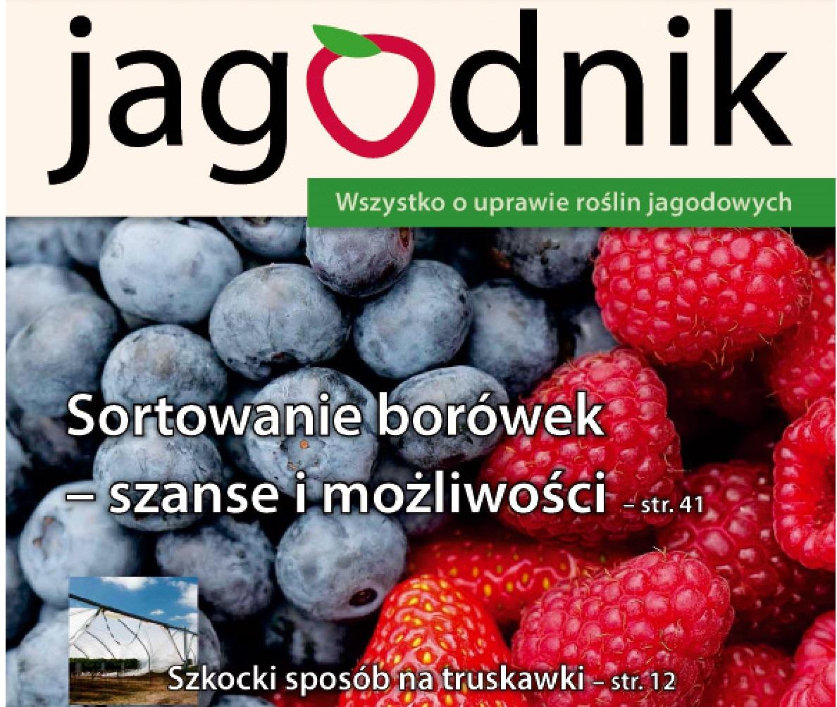 Jagodnik 6/2013, uprawa truskawek, malina, porzeczka, agrest, borówka wysoka