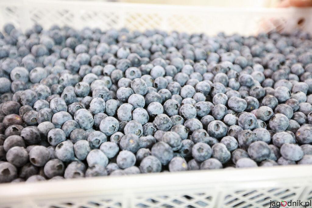 Agronom Berries