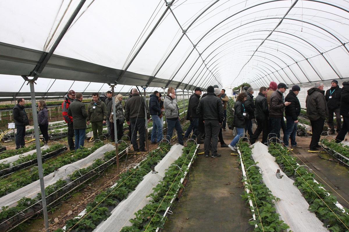 berry tech, berrytech, tunele dla truskawek, rynny dla truskawek