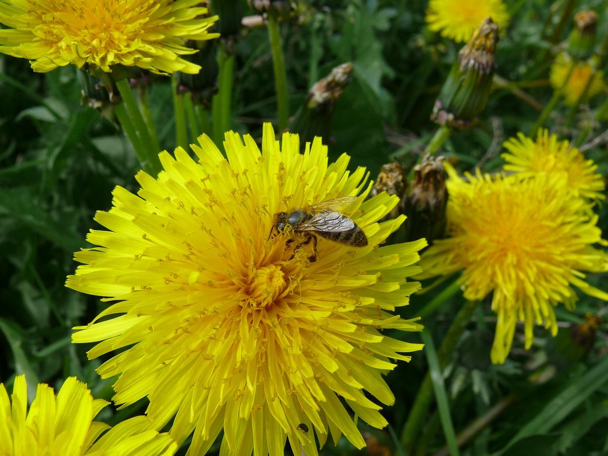prewencja, pszczoły, zapylanie truskawek, zapylanie malin, ochrona truskawek, ochrona malin, jagodnik