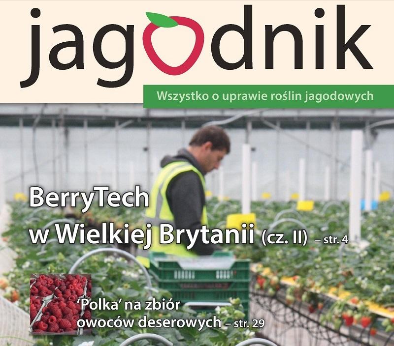 jagodnik 5, uprawa truskawek, malina, porzeczka, borówka wysoka, borówka, aronia,
