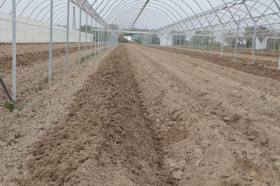 malinowe factory, uprawa malin, pobieranie próbek gleby do analizy chemicznej