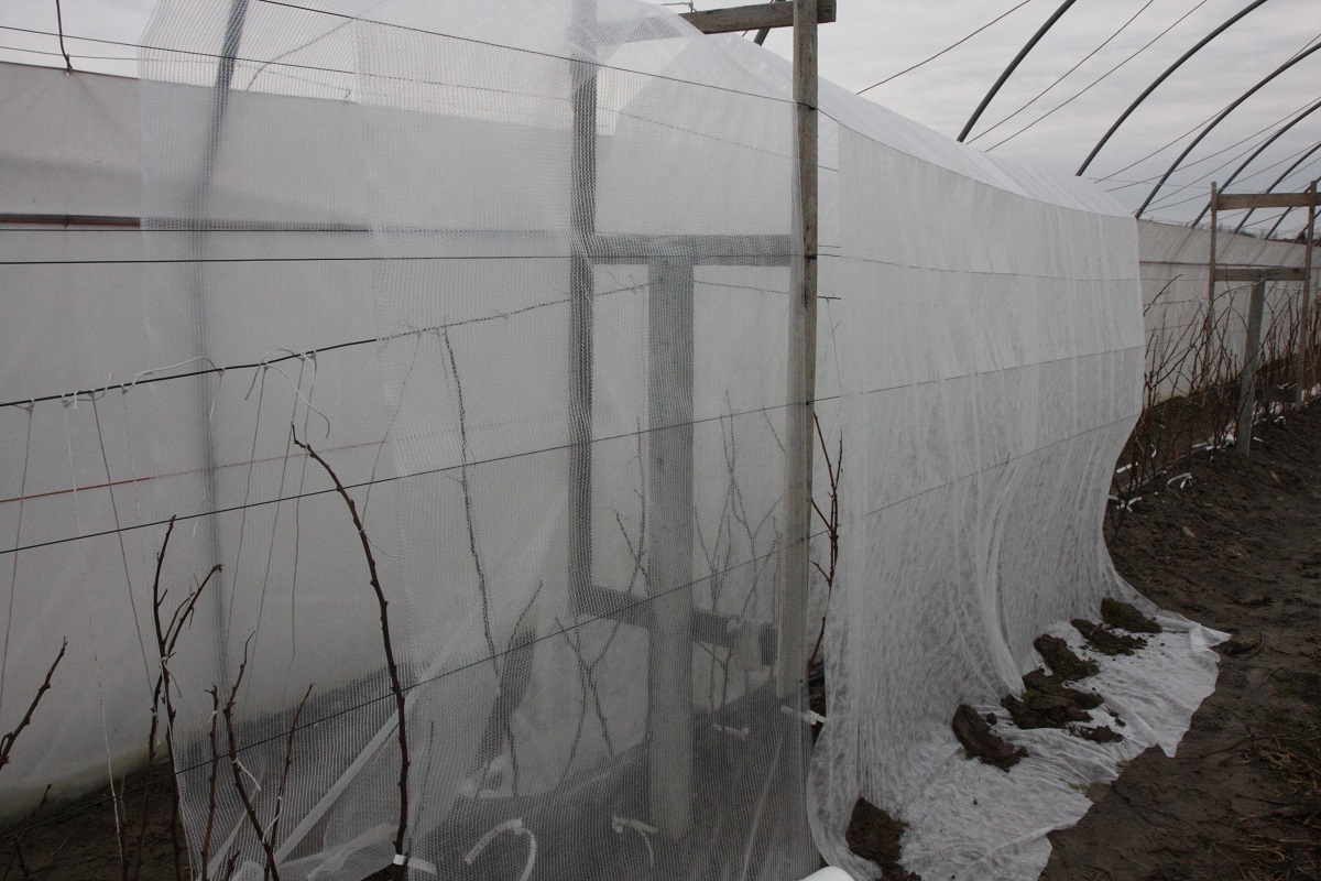 Malinowe Factory, malina, agrowłóknina, multiclima, Ceres, GEO Polska,