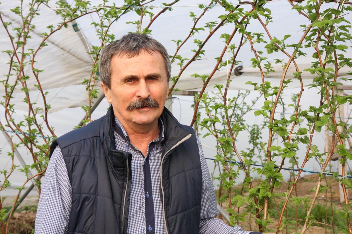 Henryk Wilczyński, malinowe factory, nawożenie malin,