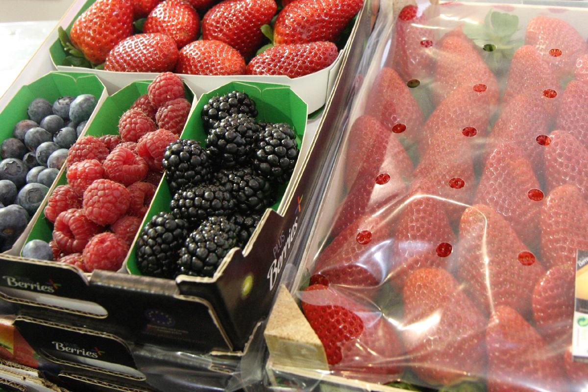 owoce jagodowe, jagodnik.pl, jeżyny