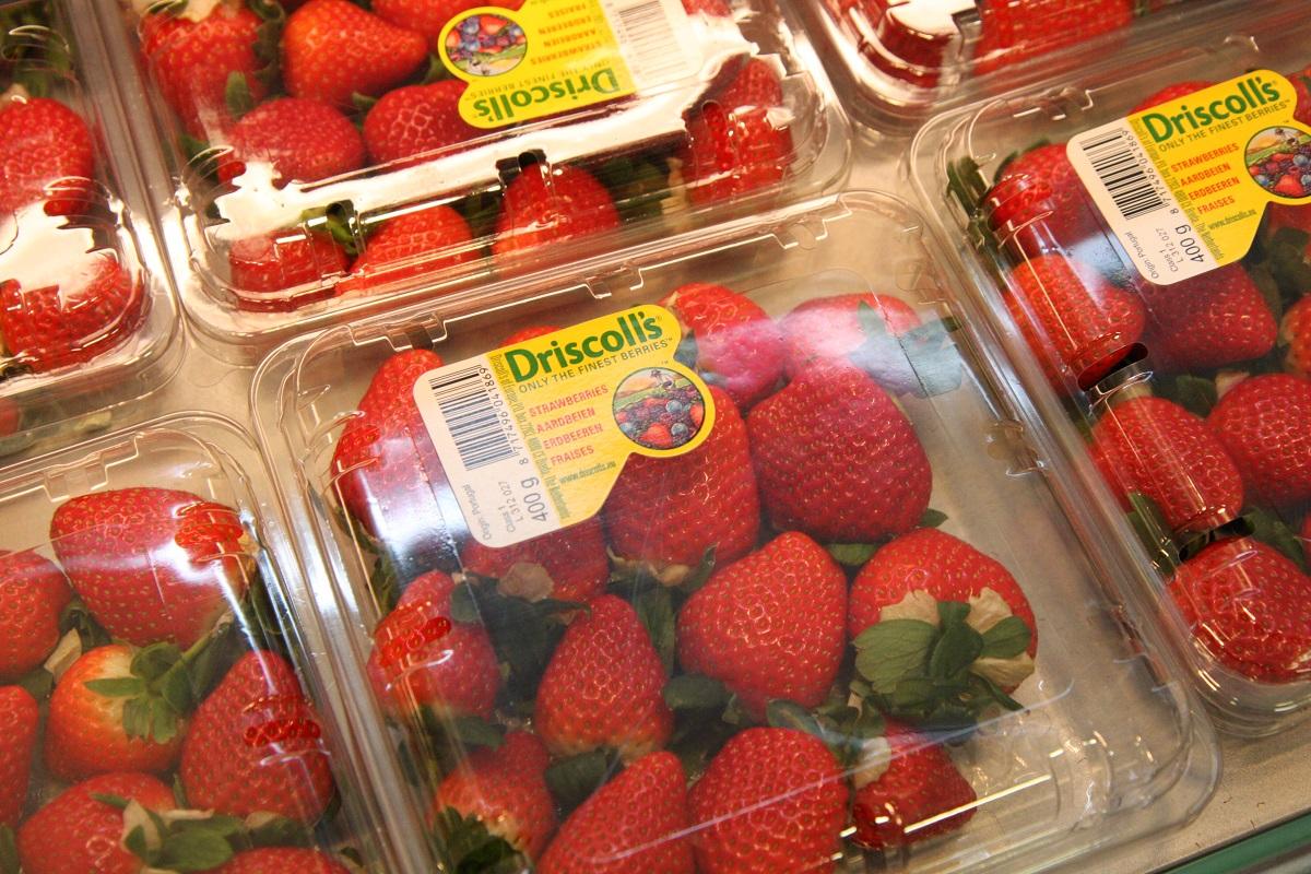 truskawka, odmiany truskawek