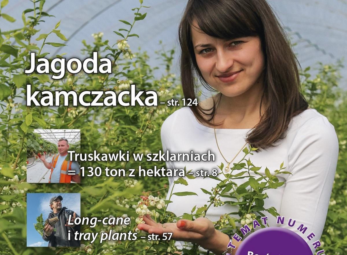 Jagodnik, uprawa truskawek, borówka amerykańska