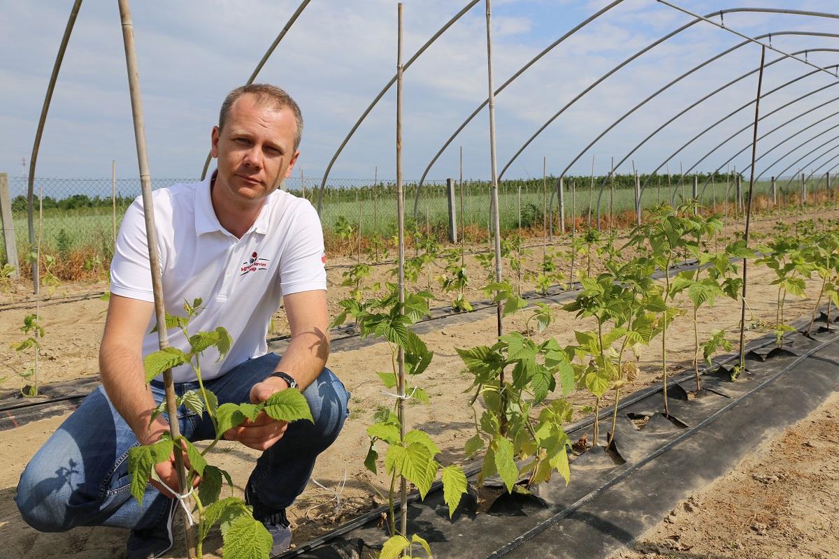 Krzysztof Sak, Agronom Berries, Malinowe Factory, Uprawa Malin,