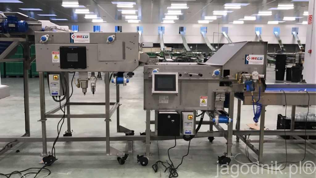 Maszyny do sortowania borówki amerykańskiej